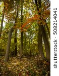 autumn trees | Shutterstock . vector #508214041