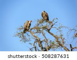 African Vulture On The Tree....