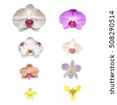 Isolated Flower Orchid Flower Isolated - Fine Art prints