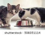 Stock photo cute little kitten with a bowl of granules at home or in indoor 508351114