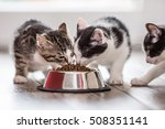 Stock photo cat cute little kitten with a bowl of granules at home or in the garden 508351141