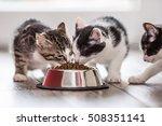 Cute Little Kitten With A Bowl...