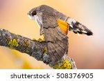 Macro Close Up Of A Hummingbir...