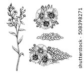 Hand Drawn Flax Flowers And...