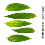 set of rich green leaves with... | Shutterstock . vector #5084839