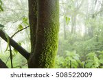 ferns or mosses on the forest | Shutterstock . vector #508522009