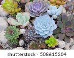 A Group Of Miniature Succulent...