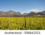 stellenbosch wine region close... | Shutterstock . vector #508661521