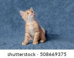 Stock photo ginger kitten looking up age months 508669375