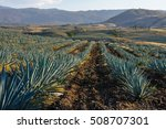 agave fields in tequila ... | Shutterstock . vector #508707301
