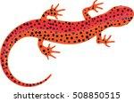 Salamander Clipart   Vector...