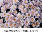 close up of pink flower for... | Shutterstock . vector #508857124
