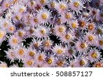 close up of pink flower for... | Shutterstock . vector #508857127
