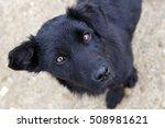 black dog | Shutterstock . vector #508981621