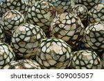 pineapples or agave heads piled ... | Shutterstock . vector #509005057