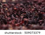 Surface Of Red Seaweed Closeup...