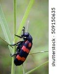 A Beetle With A Unique Color...
