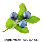 Blueberry Branch Isolated On...