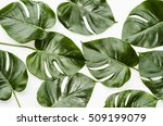 big green leaf for flower... | Shutterstock . vector #509199079