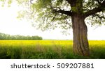 landscape with tree on the field | Shutterstock . vector #509207881