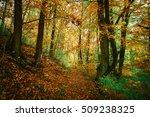autumn colorful forest | Shutterstock . vector #509238325