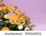 Close Up Of Orange Begonia Wit...