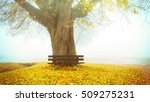 bench on a lime tree in autumn | Shutterstock . vector #509275231