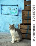 Small photo of Morocco / alley cat