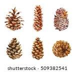 watercolor pine cones on white... | Shutterstock . vector #509382541
