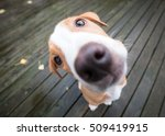 funny extreme close up small... | Shutterstock . vector #509419915