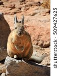 Small photo of Viscacha, lagostomus maximus, family of the chinchillas, southern Bolivia