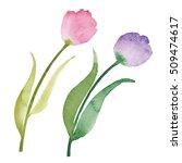 beautiful watercolor tulips.... | Shutterstock . vector #509474617
