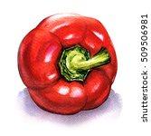 red fresh bell bulgarian pepper ... | Shutterstock . vector #509506981