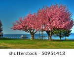 Spring Trees On The Chesapeake...