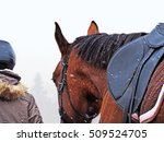 Small photo of Rider with a horse goes in a snowstorm