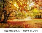 autumn landscape. colorful... | Shutterstock . vector #509541994