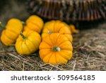 Six Small Pumpkins Arrangement...