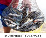 Many Fish Are Stacked Together...