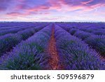 lavender field summer sunset... | Shutterstock . vector #509596879