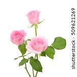 Beautiful Scarlet Rose Flowers...