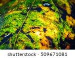 close up leaf | Shutterstock . vector #509671081