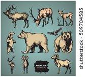 wildlife. hand drawn vector... | Shutterstock .eps vector #509704585