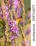 butterflies   Shutterstock . vector #509714077