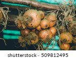 organic biological onions in a...