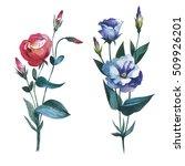 wildflower eustoma flower in a... | Shutterstock . vector #509926201