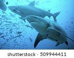 bull shark  carcharhinus leucas ...   Shutterstock . vector #509944411