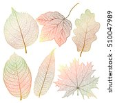 set colored autumn leaves on...   Shutterstock .eps vector #510047989