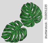 exotic flowers set. botanical...   Shutterstock .eps vector #510051235