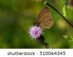 close up of butterfly on the... | Shutterstock . vector #510064345