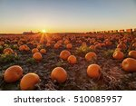 Pumpkin Field At Sunset